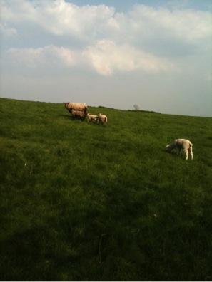 English grass