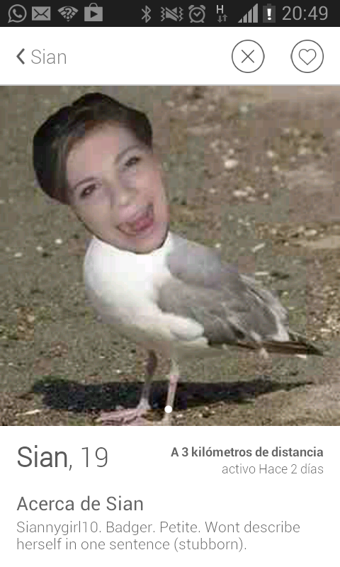 Being a pigeon is one thing; being a seagull...
