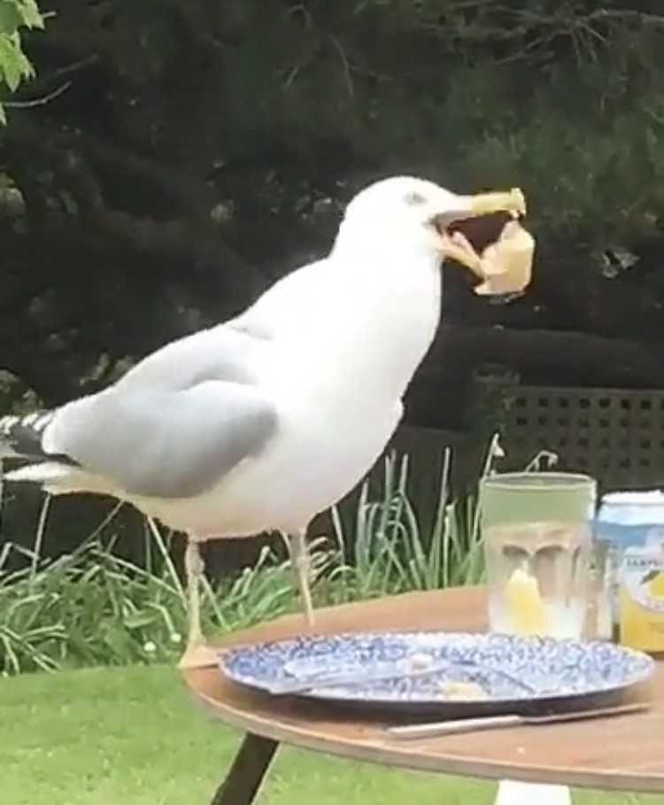 Image may contain: Dove, Pigeon, Seagull, Beak, Bird, Animal