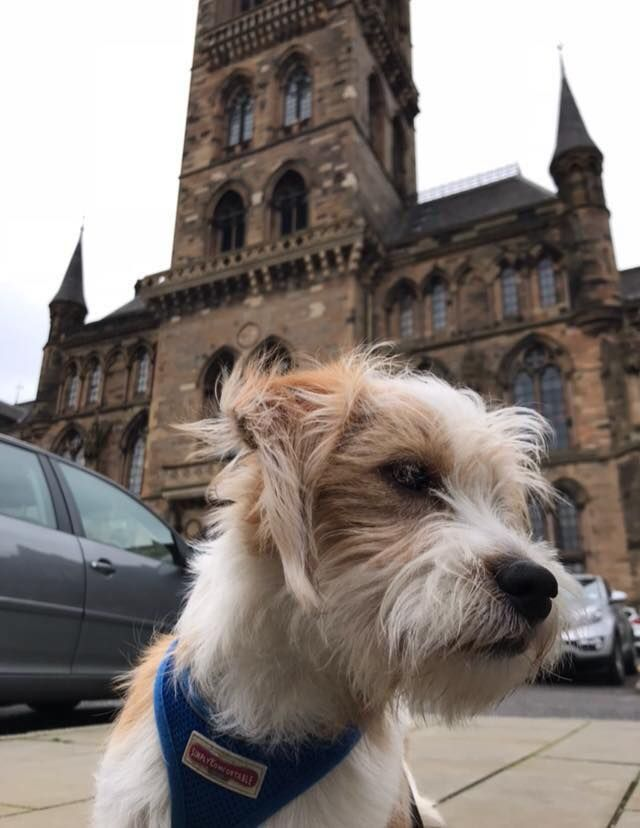 Image may contain: Tower, Steeple, Spire, Building, Architecture, Vehicle, Transportation, Car, Automobile, Terrier, Pet, Mammal, Dog, Canine, Animal