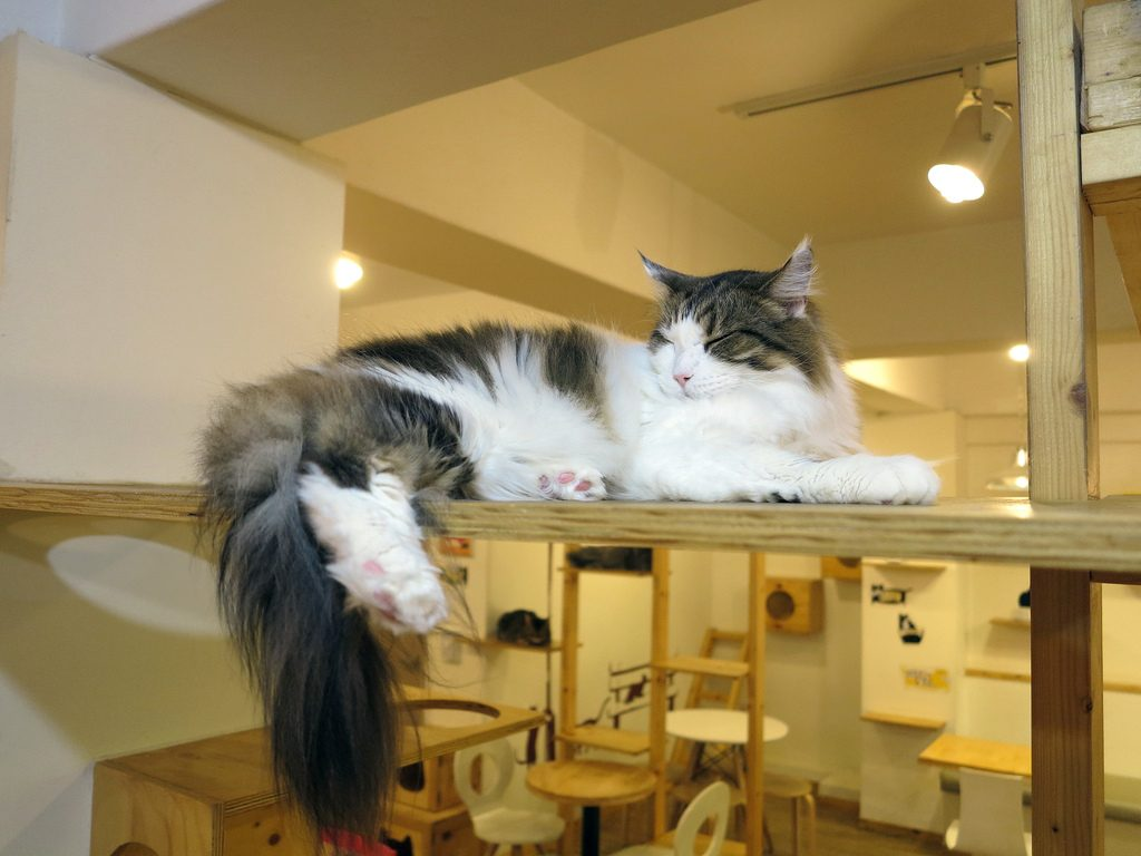 Amherst Cat Cafe