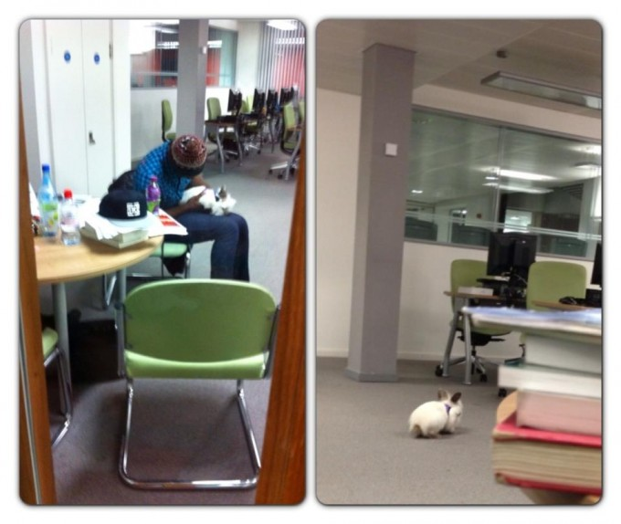 An unrelated picture of someone's rabbit in the library