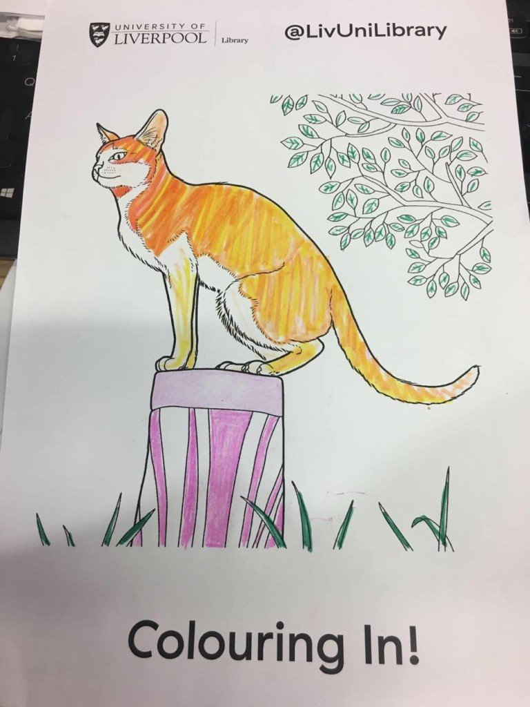 cat drawing cat library sj revision