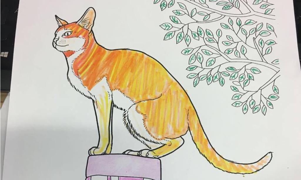 cat drawing sj