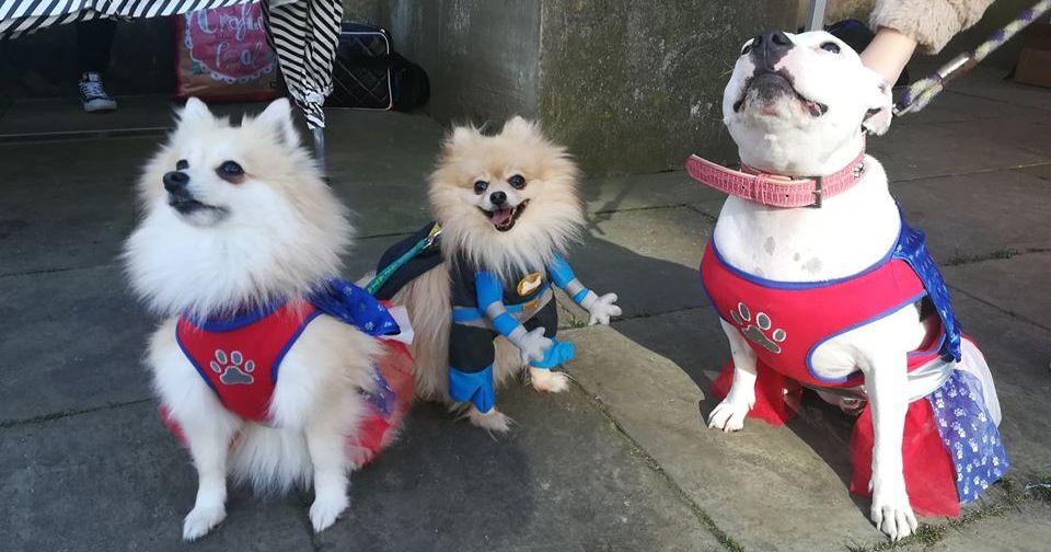 Image may contain: Pet, Mammal, Eskimo Dog, Dog, Canine, Animal