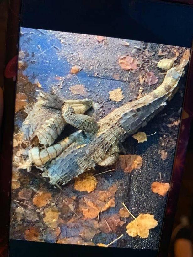 Image may contain: Rock, Soil, Reptile, Animal, Wood