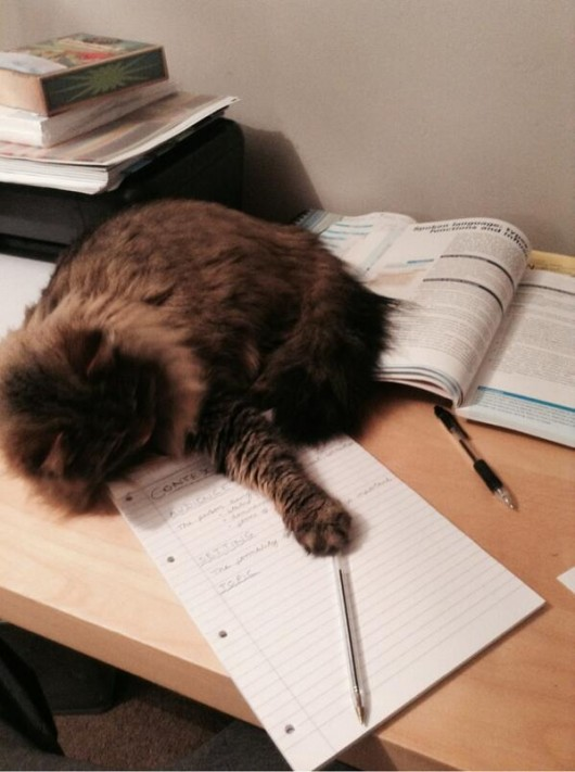 cat revision
