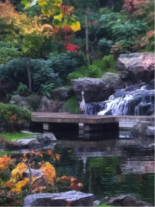 In the Kyoto Garden, everyone can walk on the bridge