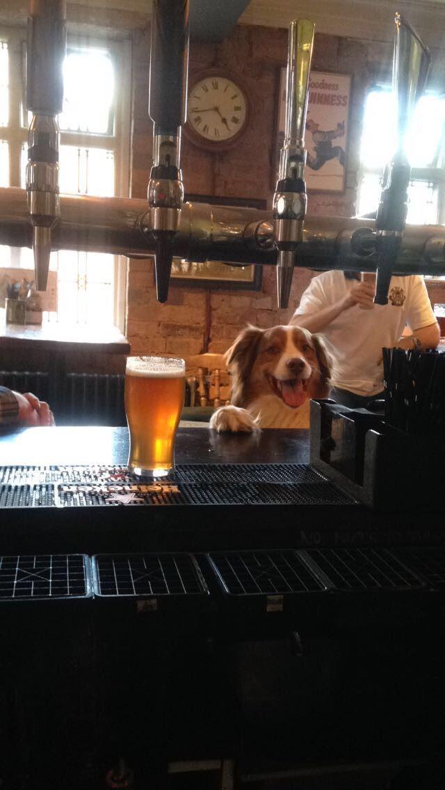 Image may contain: Spaniel, Cocker Spaniel, Restaurant, Cafe, Pet, Mammal, Hound, Dog, Canine, Beagle, Animal