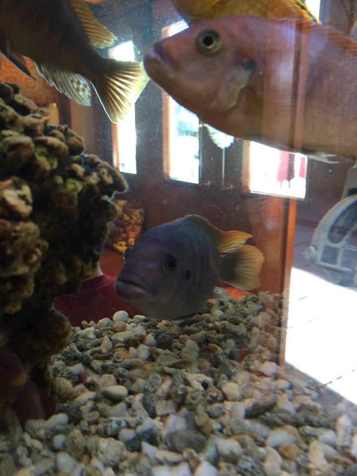 Orange Rooms fish 4