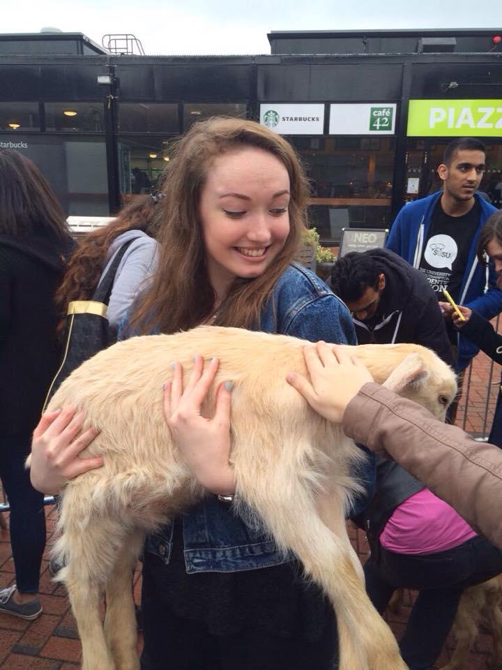 Petting zoo 10