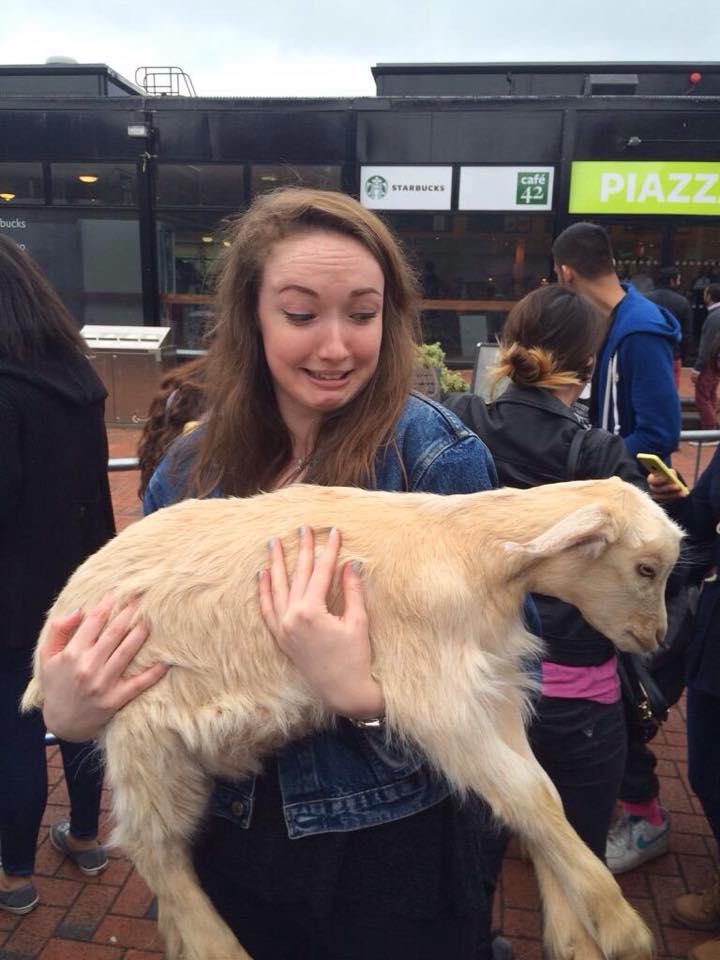 Petting zoo 9