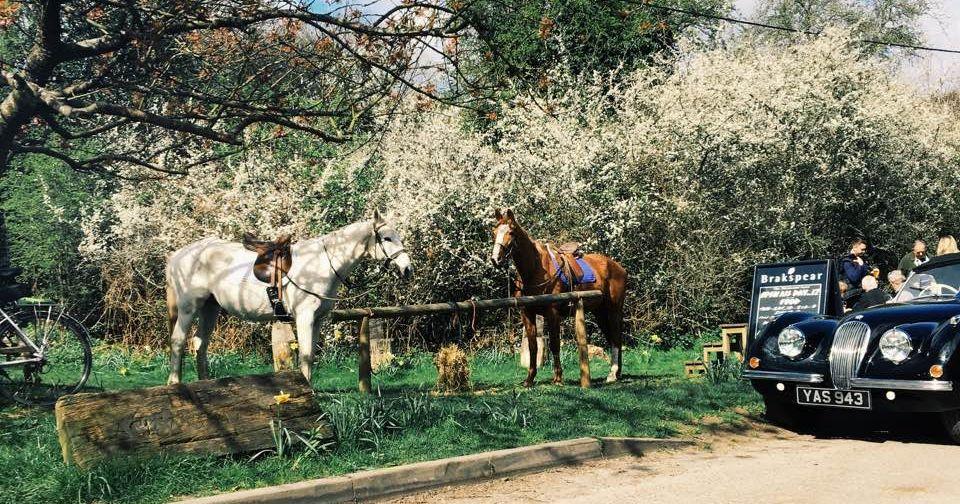 Image may contain: Vehicle, Transportation, Police Car, Car, Automobile, Mammal, Horse, Animal
