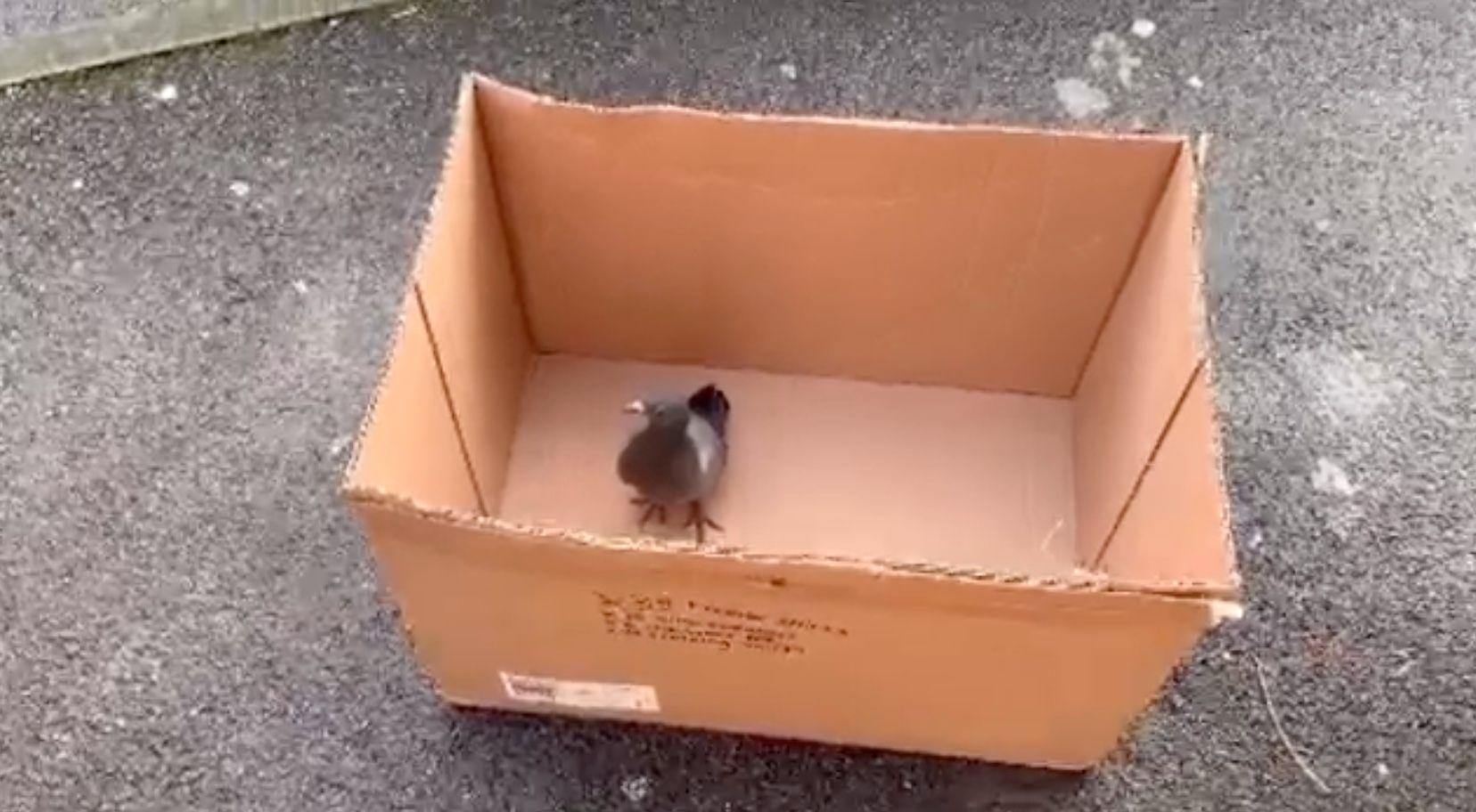 Image may contain: Carton, Cardboard, Box
