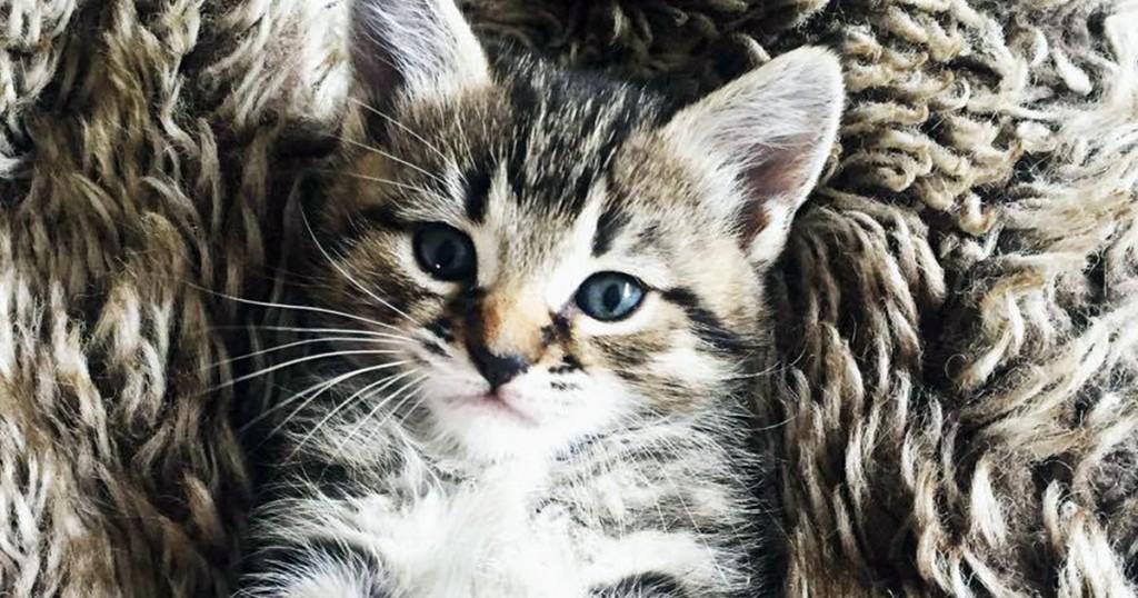cat featured