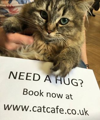 The cat café are now taking bookings for when they open