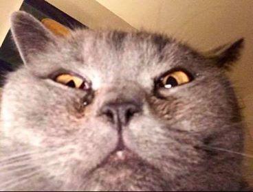 Image may contain: Pet, Mammal, Cat, Animal