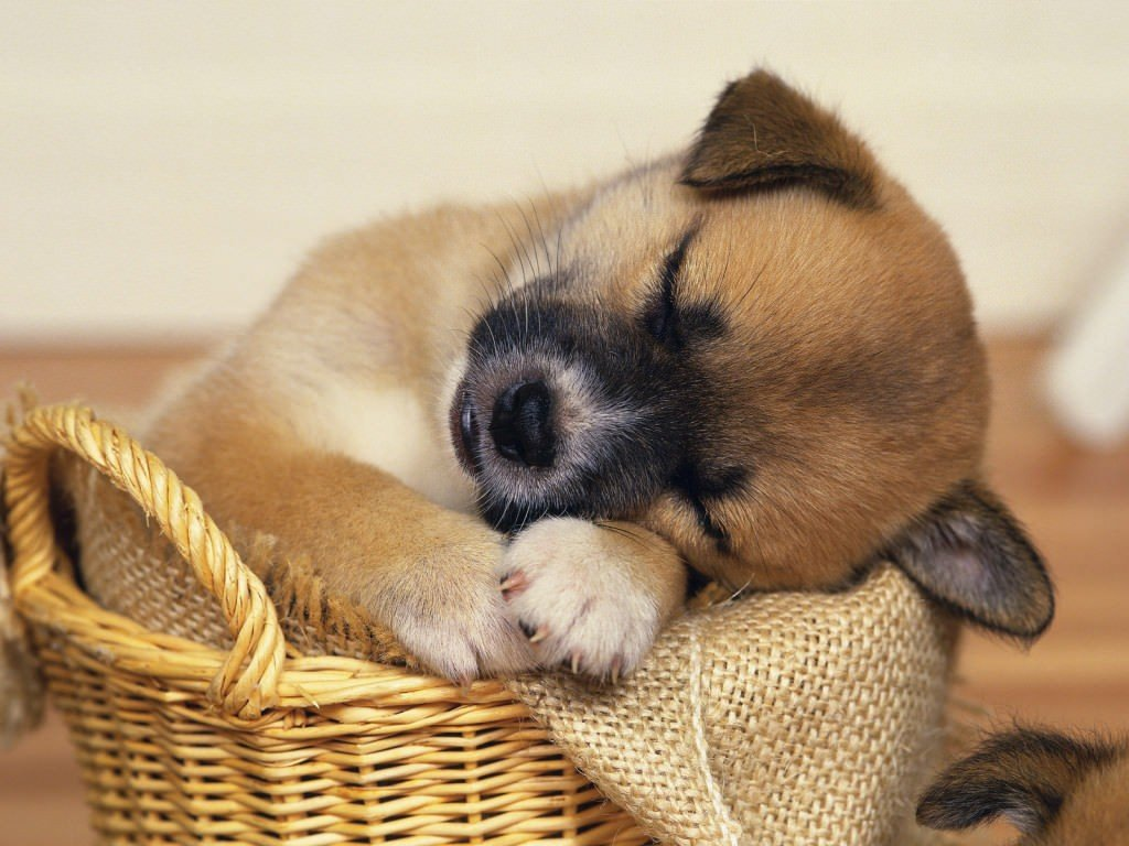sleepy-animals-awesomelycute-com-4291
