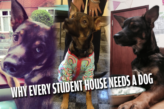Why every student house needs a dog for Every dog needs a home