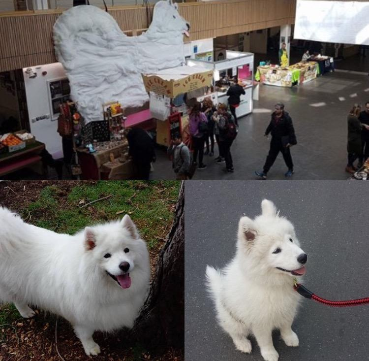 Cloud Dog (bottom left) and Bella or Cloud Puppa (bottom right).
