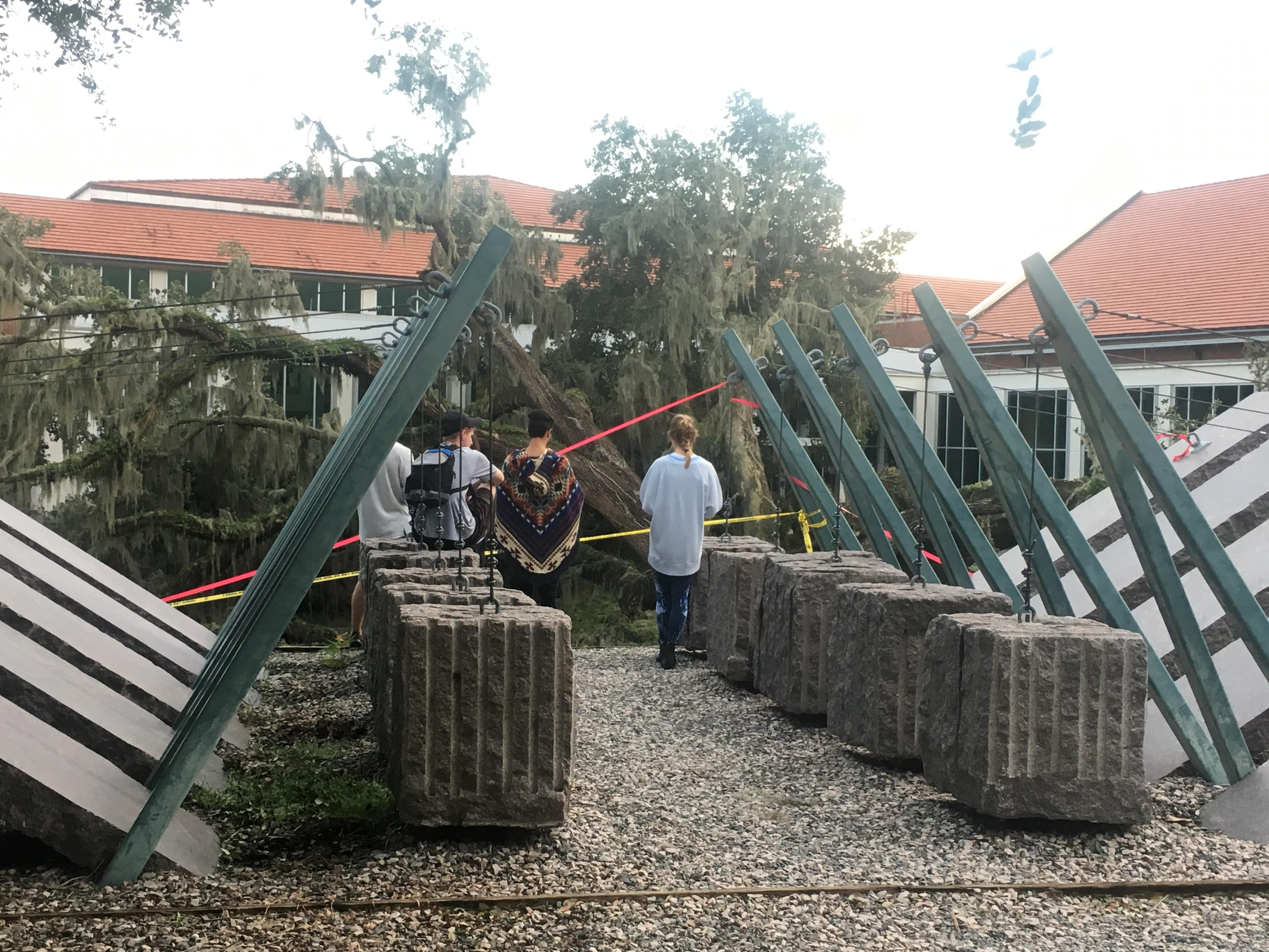 Students mourning the loss of the giant tree at NPB.