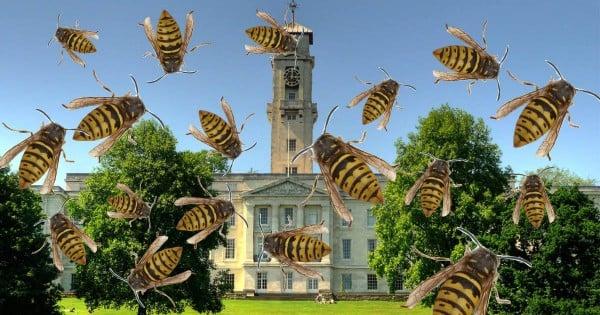 notts wasps