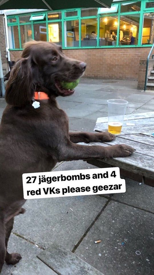 Image may contain: Beer, Alcohol, Glass, Person, Human, Juice, Drink, Beverage, Animal, Dog, Mammal, Canine, Pet