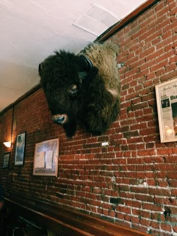 The buffalo at The Pub on Pearl, tradition is to kiss it when you turn 21.