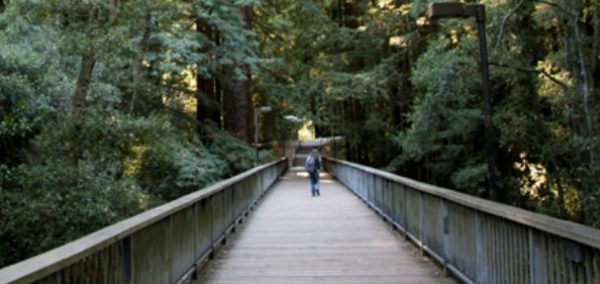Suspect Arrested After Attempted Kidnapping On Ucsc Campus
