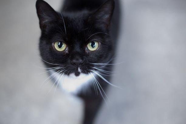 Image may contain: Black Cat, Mammal, Cat, Pet, Animal