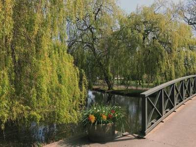 Image may contain: Building, Bridge, Willow, Tree, Plant