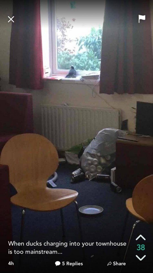 Someone's had a heavy night...