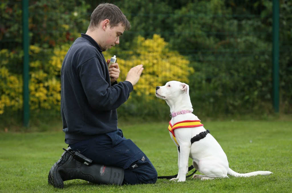 """Craig holmes 25 RSPCS animal care assistant with deaf puppy Marni who is learning sign language in Sheffield. see rossparry copy RPYDEAF: An adorable deaf puppy who learns commands through sign language is looking for a new home. Marni, described as """"full of fun and mischief"""", is four months old and is currently being cared for by a local RSPCA centre. But she's looking for a special owner who she can settle down with and start to enjoy a full and happy life despite her hearing problems."""