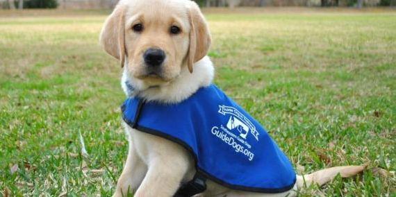 Image may contain: Adorable, Pet, Mammal, Labrador Retriever, Dog, Canine, Animal
