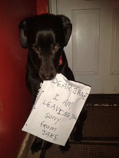 P.S. I want the dog back.