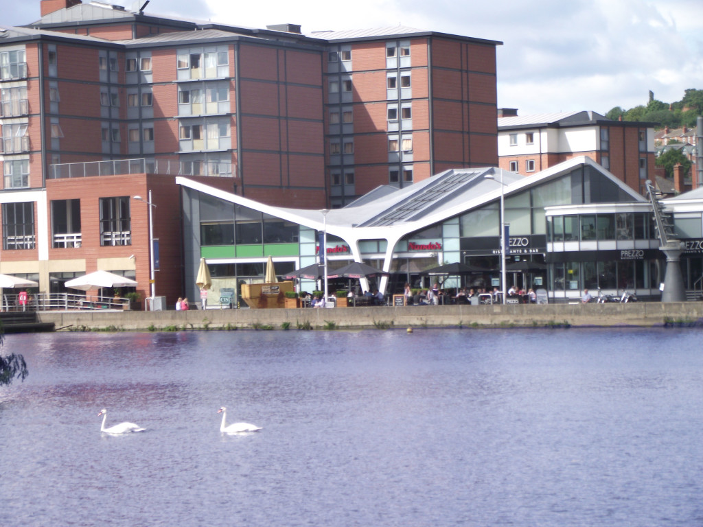 Swans too.