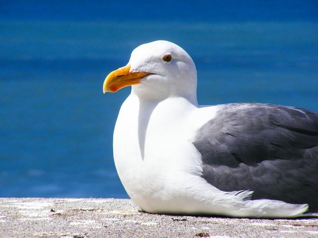 seagull-205528_640