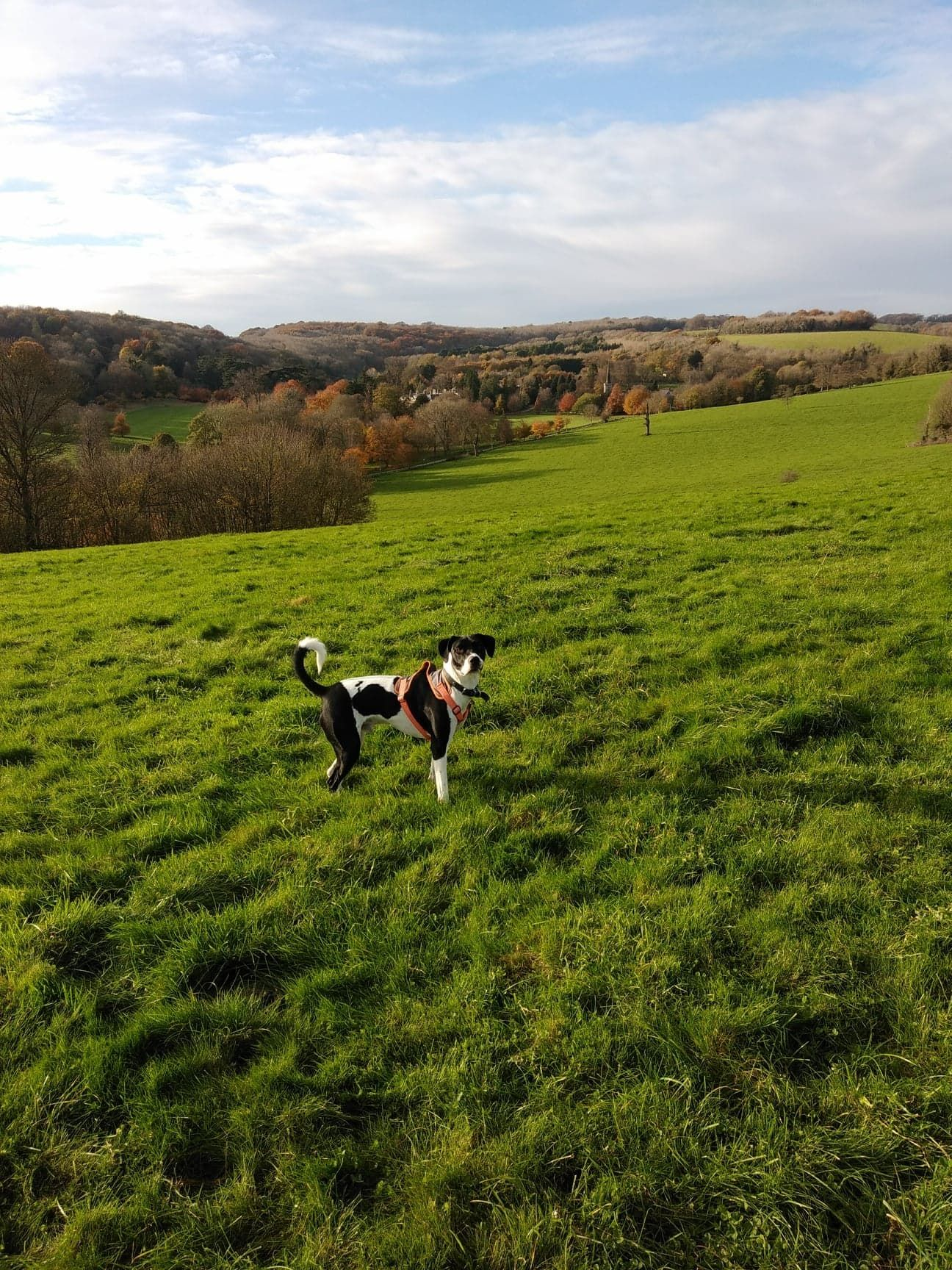 Image may contain: Ranch, Meadow, Farm, Pasture, Rural, Countryside, Nature, Grassland, Outdoors, Mammal, Canine, Pet, Dog, Animal, Field