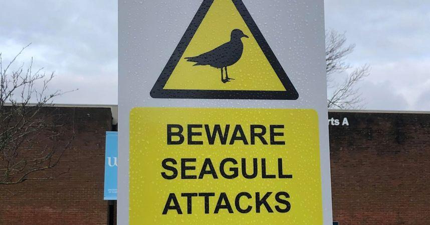 Image may contain: Road Sign, Sign, Symbol, Animal, Bird