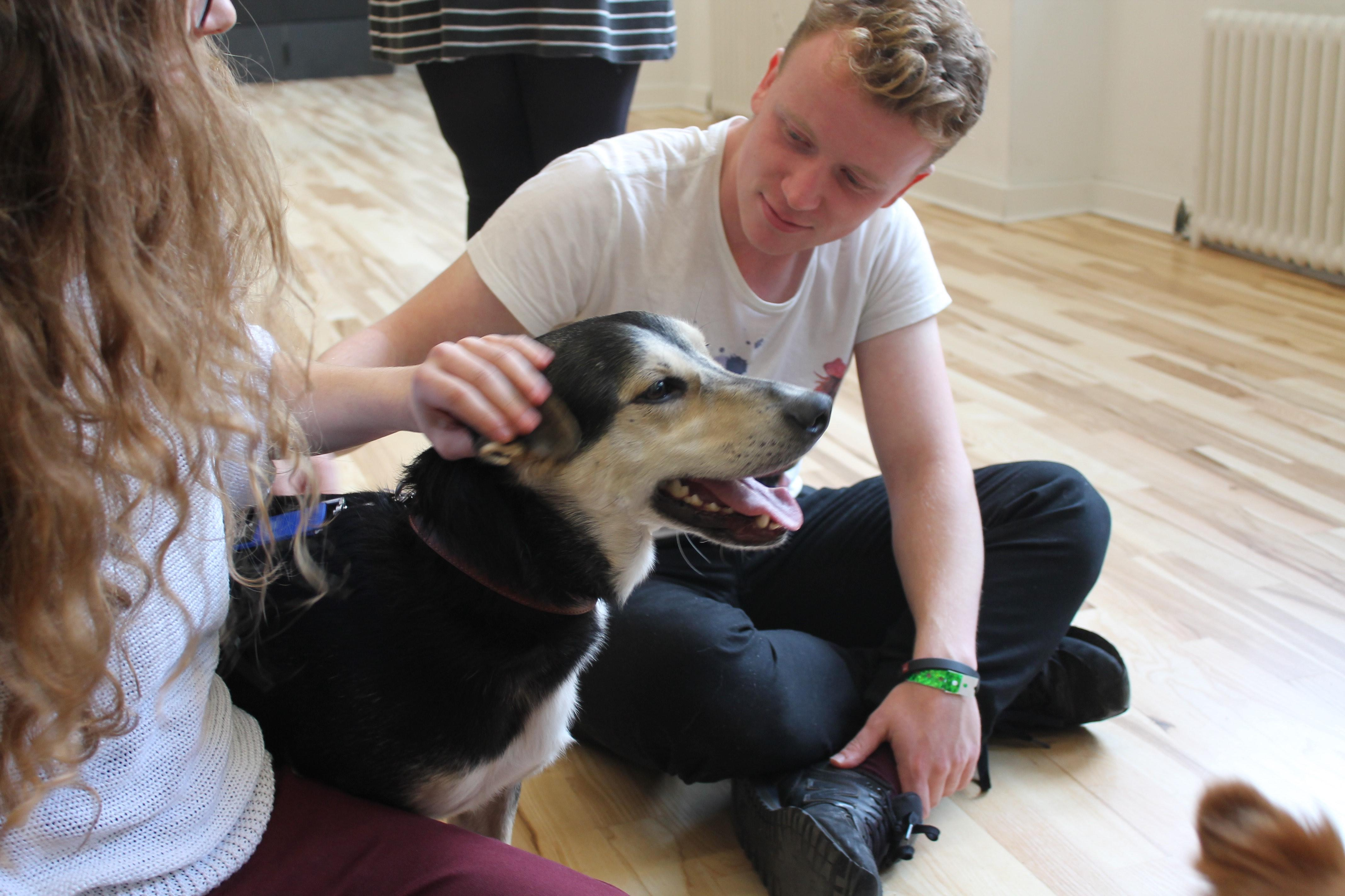 Even the dogs were de-stressing while enjoying the cuddles..