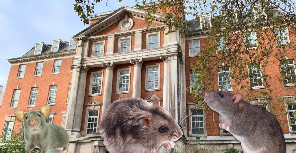 Image may contain: Pet, Rodent, Mammal, Animal, Rat