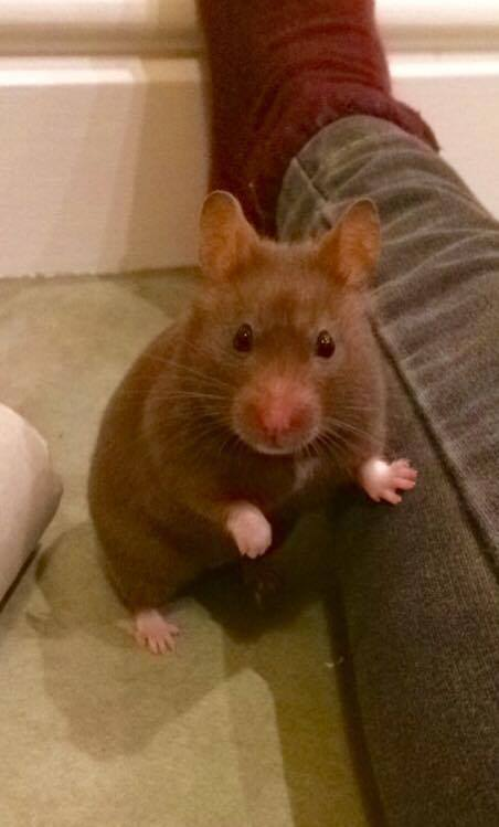 flo hamster