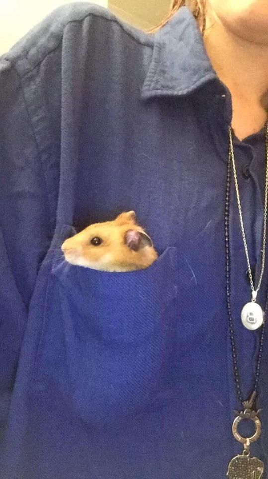 hamster pocket