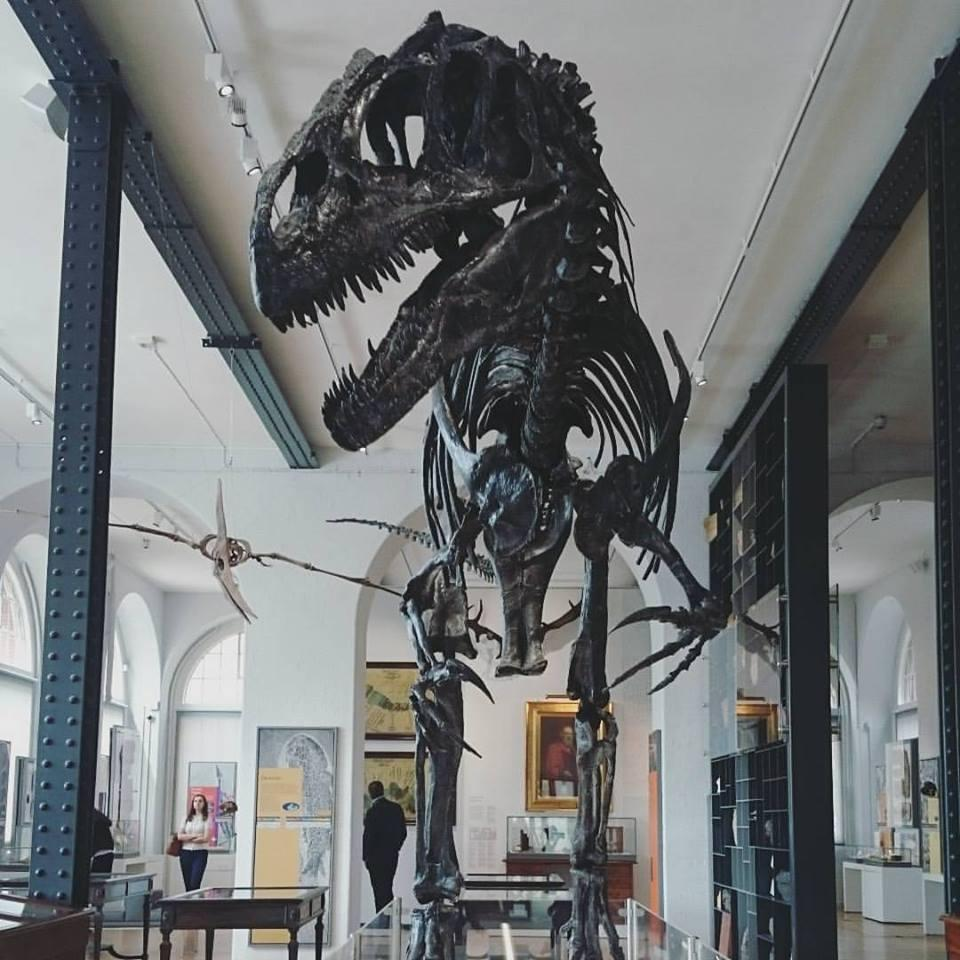 Replica of Allosaurus