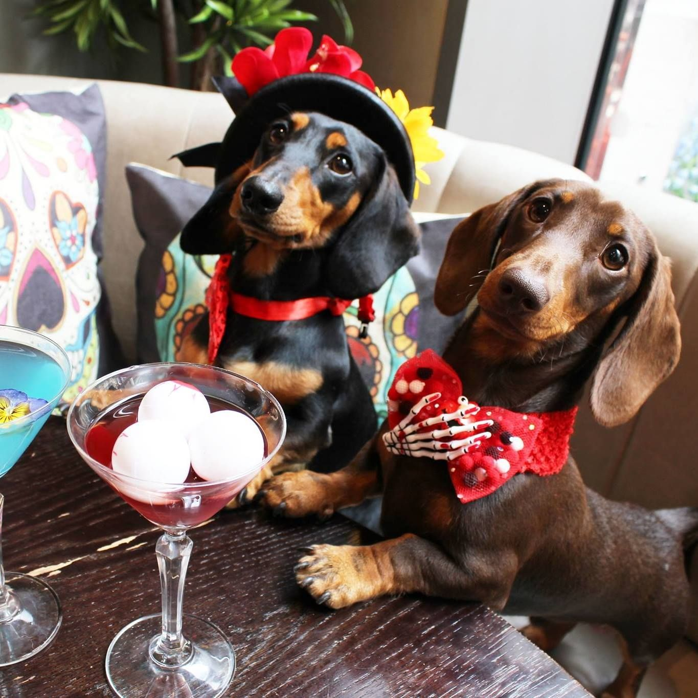 Image may contain: Cocktail, Goblet, Alcohol, Beverage, Drink, Glass, Pet, Mammal, Animal, Canine, Dog