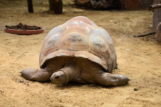 tortoise-218817_640