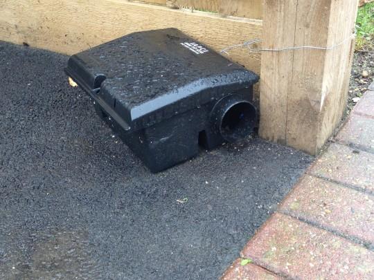 A Rainy Rat Trap