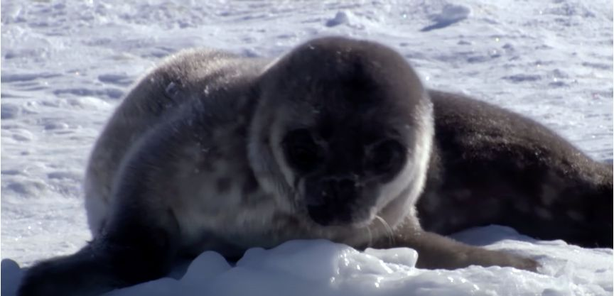 Image may contain: Sea Lion, Bear, Wildlife, Seal, Animal, Mammal, Sea Life