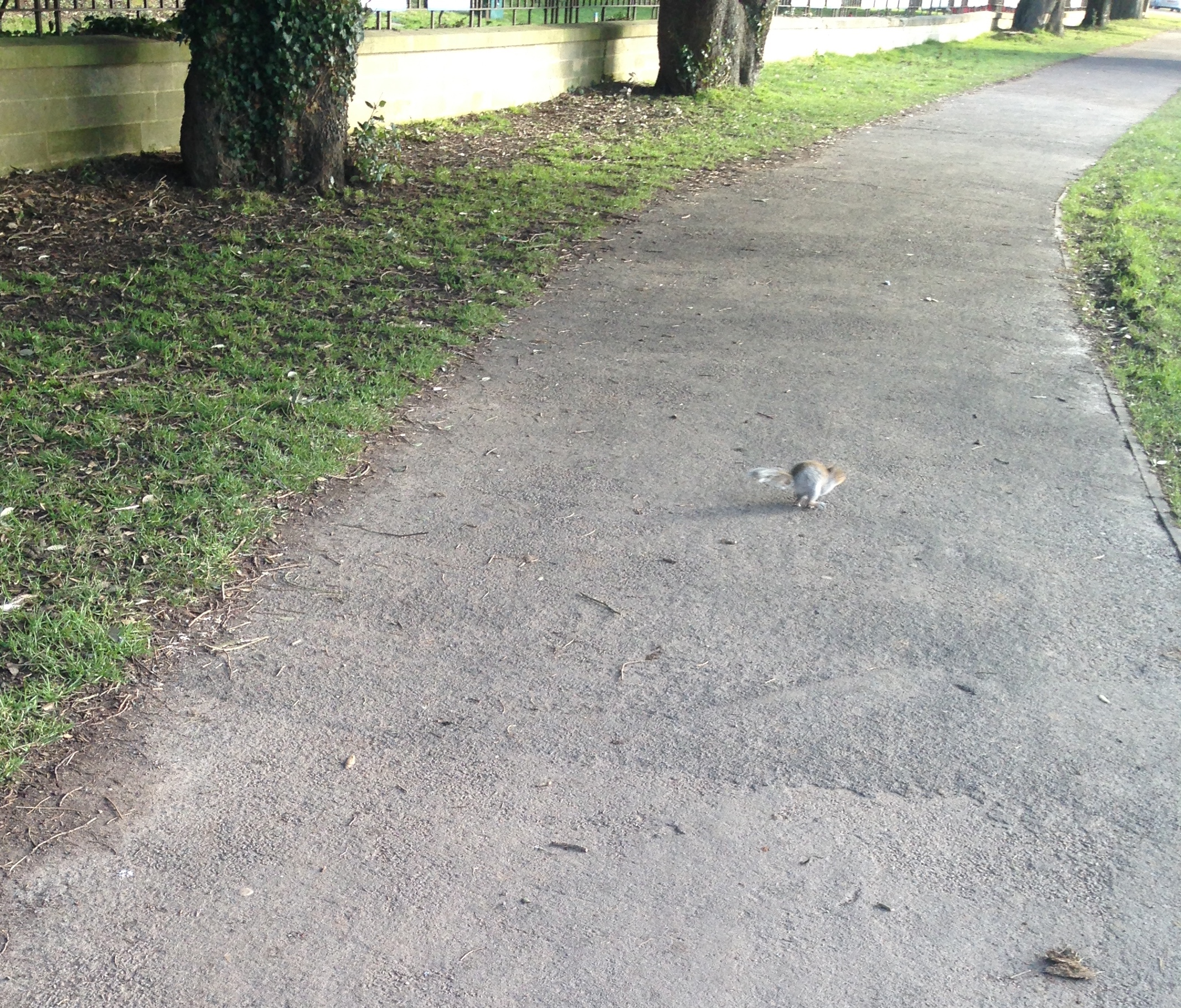A pesky squirrel flees the scene of the crime #thuglife