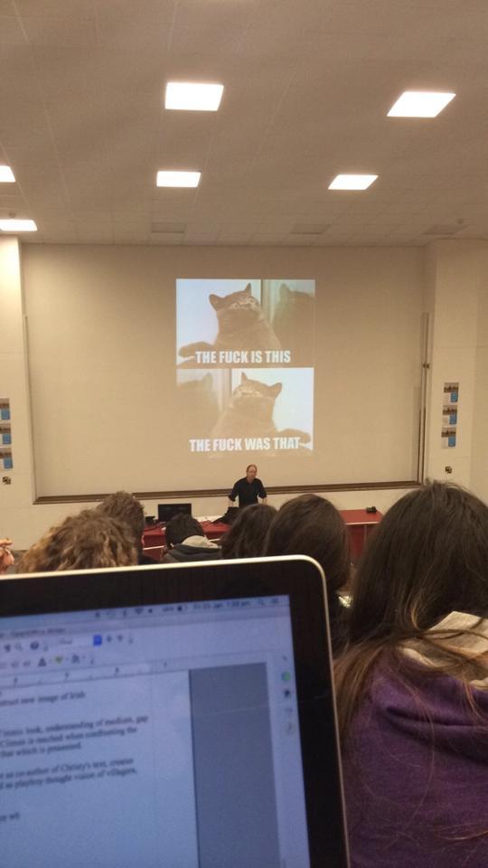 lecture cat